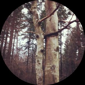 2 arbres enlaces ok 2
