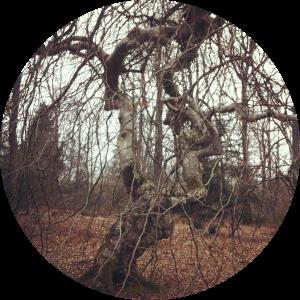 arbre liens rond